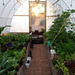 Eco Tunnels Greenhouse